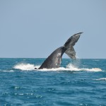 Ecudaor_2010_Whales_DSC_1154